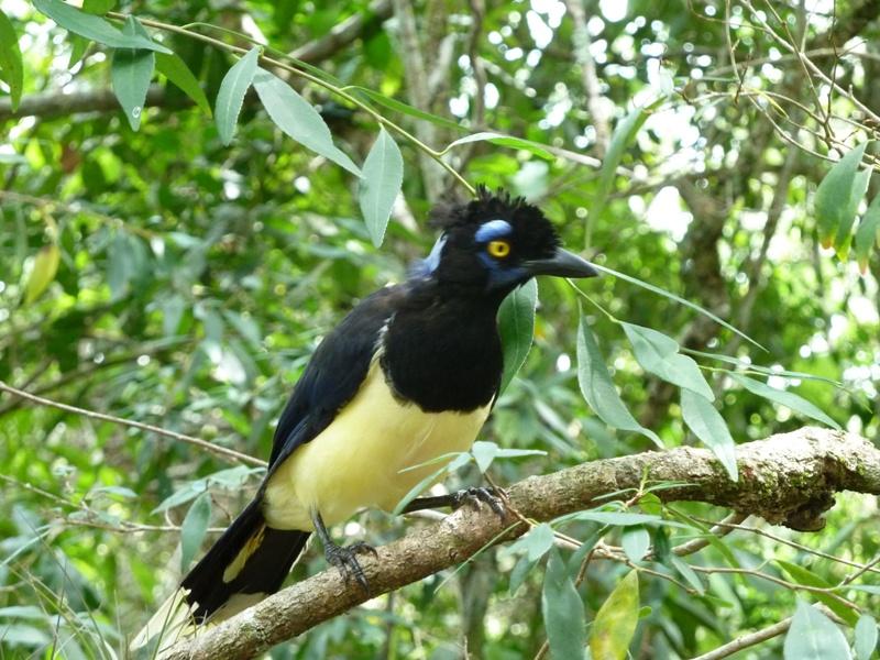 Oiseau, Iguazu, Argentina