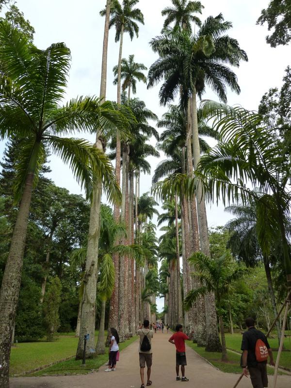jardin botanique, Rio de Janeiro