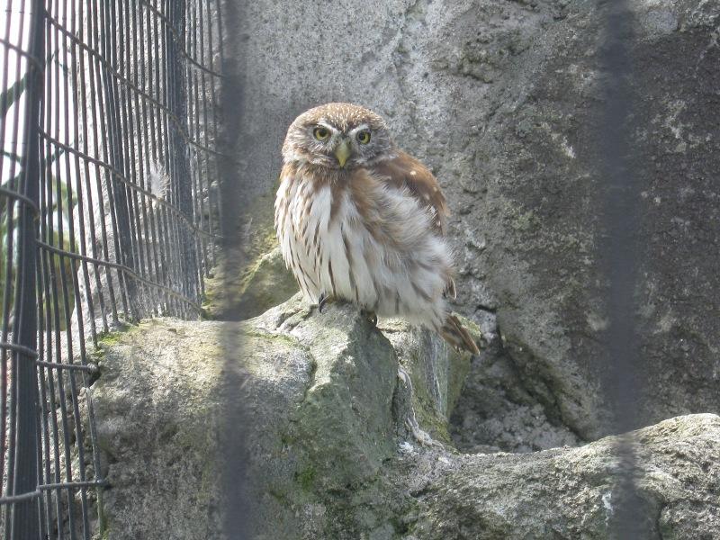 Hibou, parque El Condor