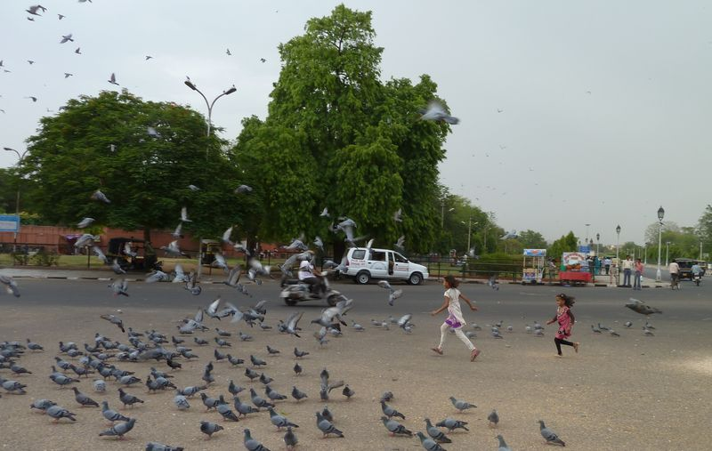 A little girl playing with the pigeons, Jaipur, India