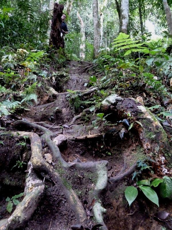 Jungle, Cameron Highlands, Malaysia