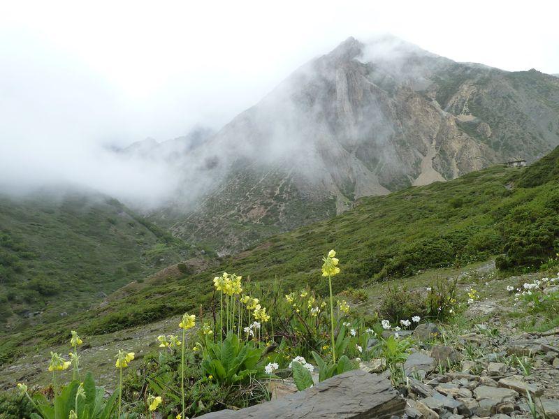 Vers Lethar, trek autour des Annapurnas, Népal