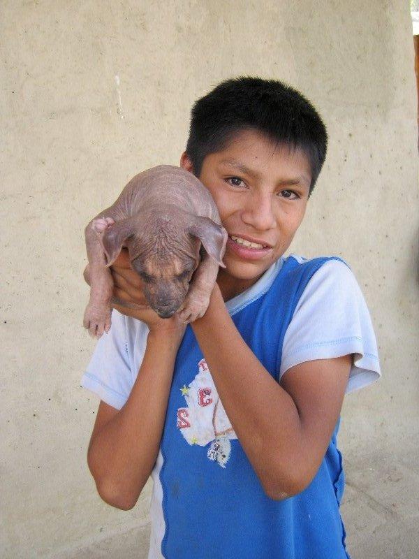 Chien nu du Pérou