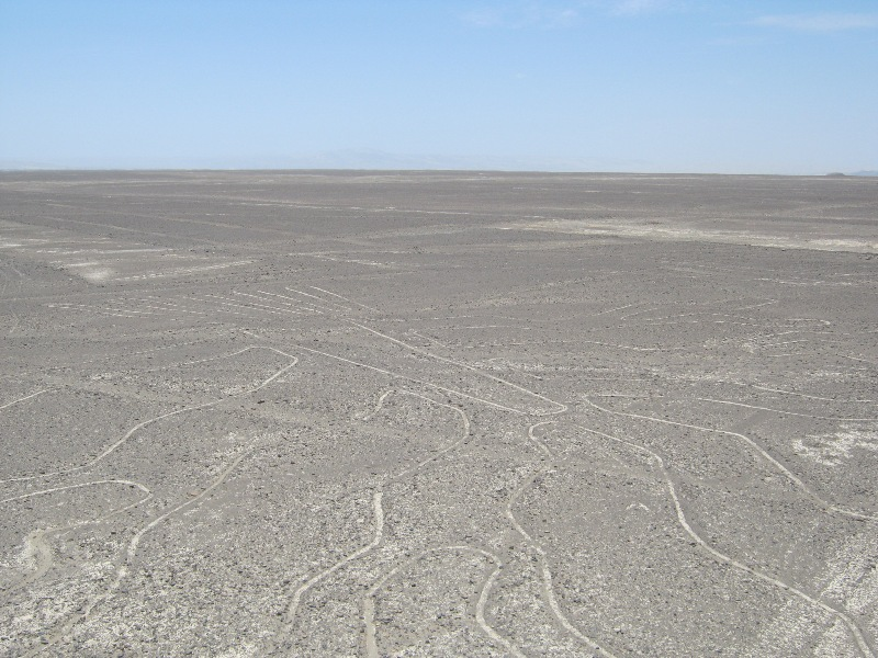 Figures de Nazca, arbre