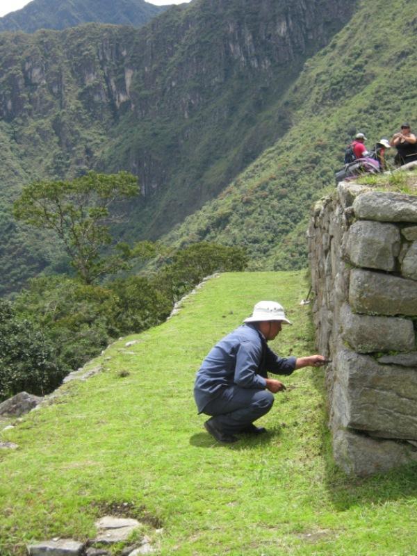 Jardinier nettoyant le mur d'une terrasse du Machu Pichu