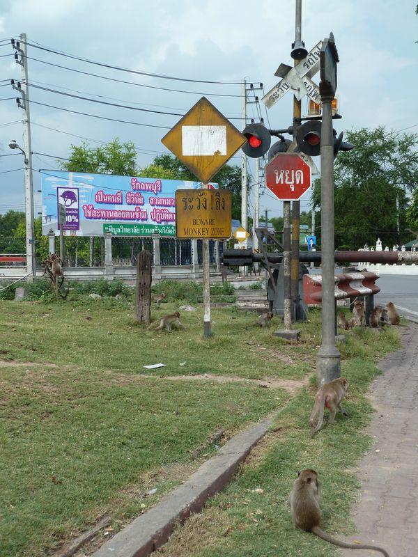 Attention aus singes, Lopburi, Thaïlande