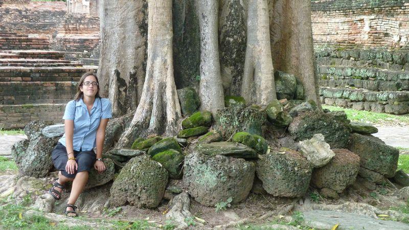 Wat Mahathat, Romane near a tree, Sukhothai, Thailand