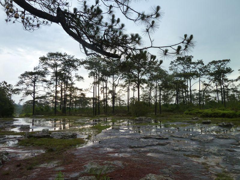 After the rain, Phu Kradung, Thailand